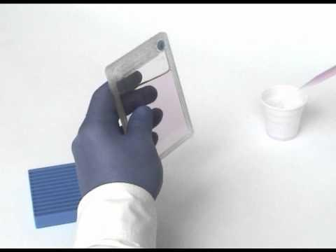 'In Situ' Cell Viability Test (Trypan Blue) with Petaka